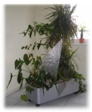 Mohren floristik pure lust auf blumen hydrokultur for Hydrokultur zuhause